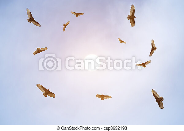 Turkey vultures soaring - csp3632193