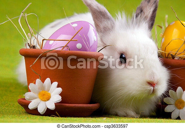 Easter Bunny - csp3633597