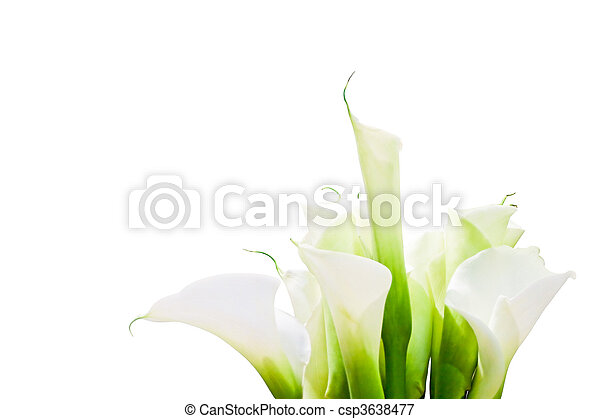 Bunch Of Calla Lilies - with - csp3638477