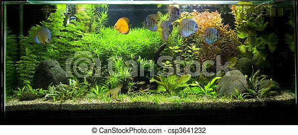 Tropical Freshwater Aquarium with Discus Fish 2 - csp3641232
