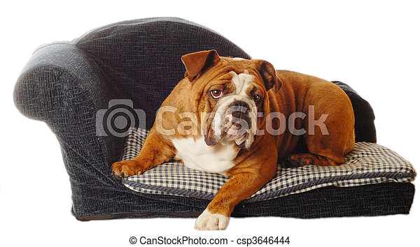 dog on a doggy couch - csp3646444