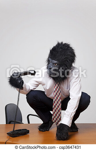 Gorilla on a desk picking up the phone. - csp3647431