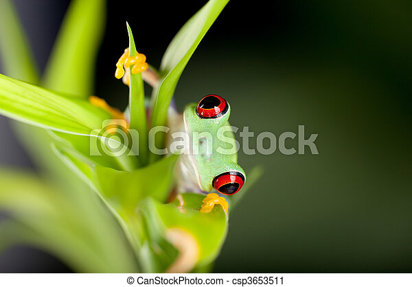 Red eyed frog in nature - csp3653511