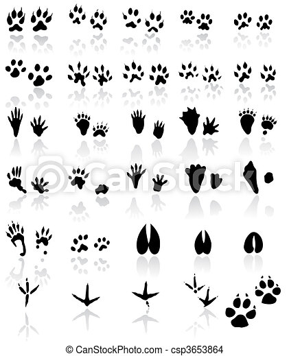 Collection of animal and bird trail - csp3653864