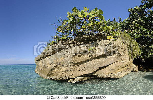 Rock with vegetation on cuban shore - csp3655899