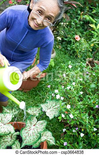 elderly asian woman gardening - csp3664838