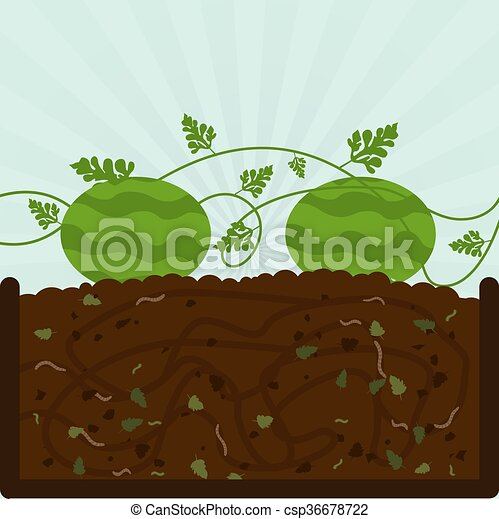 vektor illustration von pflanzen kompost wassermelone. Black Bedroom Furniture Sets. Home Design Ideas