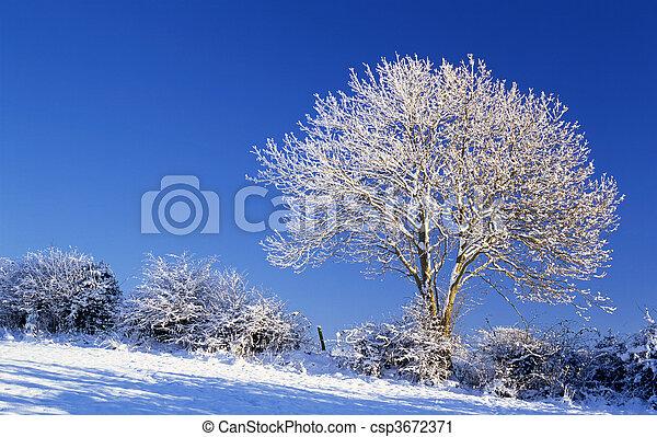 arbre, hiver - csp3672371