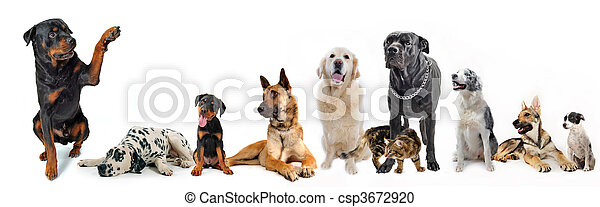 group of dogs and cat - csp3672920