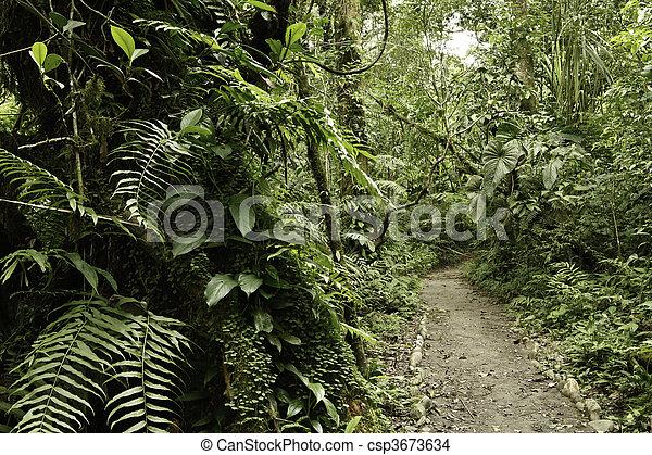 Rain forest green tropical amazon jungle - csp3673634