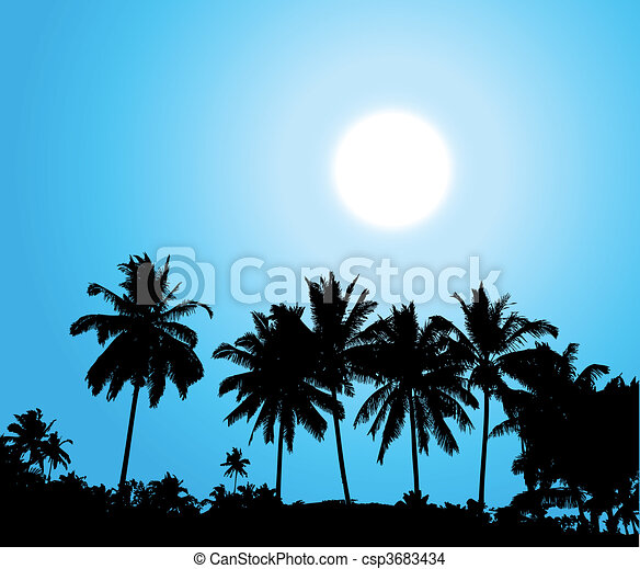 Tropical sunset, palm tree silhouet - csp3683434