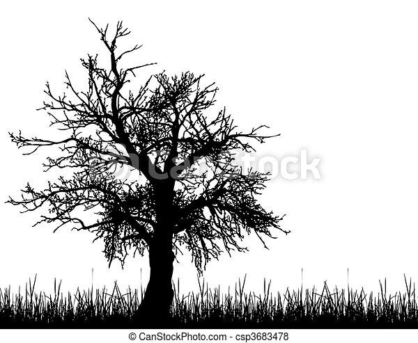 Arboles Secos Vectores Vector Viejo árbol Silueta