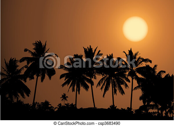 Tropical sunset, palm tree silhouet - csp3683490