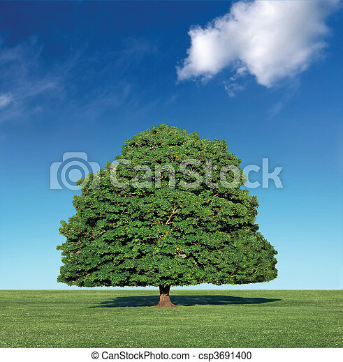 perfect tree and blue sky - csp3691400