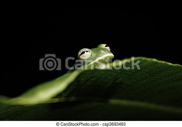green tree frog hiding behind leaf in amazon rainforest - csp3693493