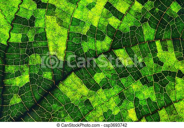 Macro of a leaf - csp3693742