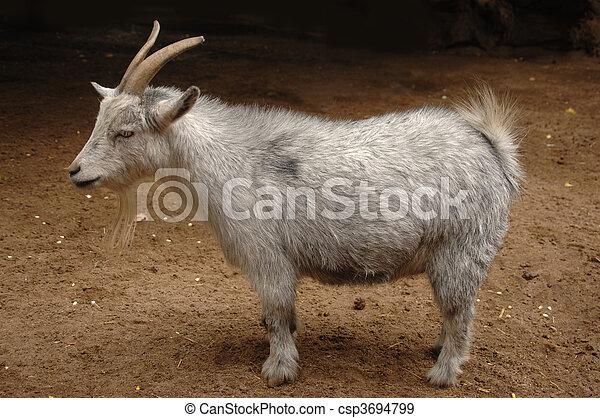 Billy Goat - csp3694799