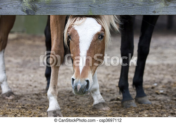 Horse - Curious Colt - csp3697112