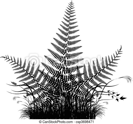 Grass vector silhouette with fern - csp3698471
