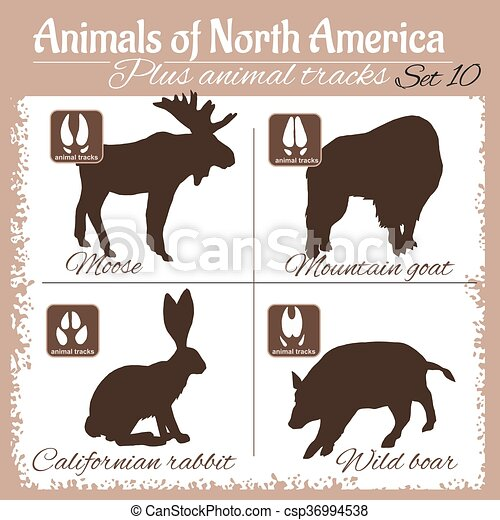 North America animals and animal tracks, footprints. - csp36994538
