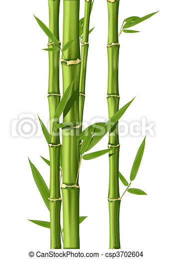 drawing of bamboo green bamboo stems isolated on the rope clip art dangling rope clip art border free