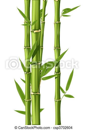 dessin de bambou vert bambou tiges isol sur les. Black Bedroom Furniture Sets. Home Design Ideas