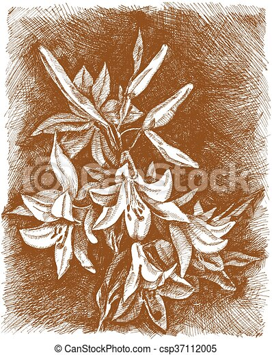 Lilies of the valley flower. - csp37112005