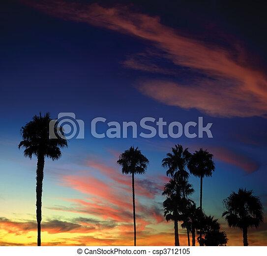 Palm Tree Sunset - csp3712105
