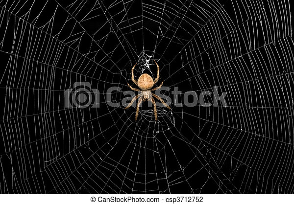 Spider and Web - csp3712752
