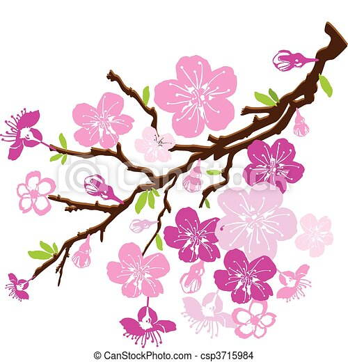 branch of the cherry blossoms - csp3715984