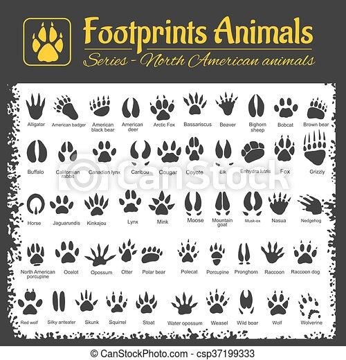 Animal Tracks - North American animals - csp37199333