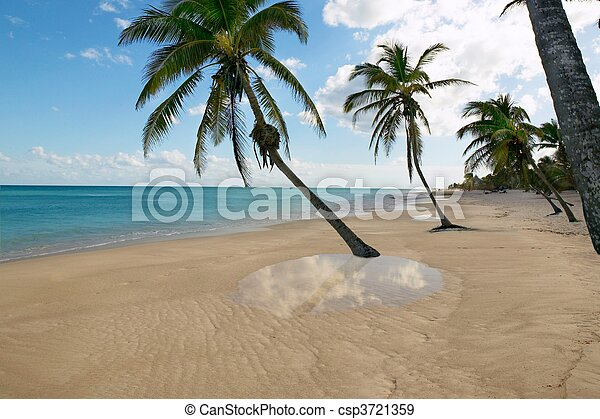 tropical beach palm trees water reflection Caribbean - csp3721359