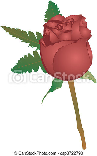 Beauty of a single red stemmed rose - csp3722790