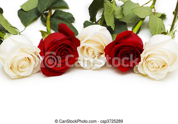 Red and white roses isolated on white - csp3725289