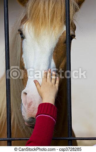 child hand stroke horse in captivity - csp3728285