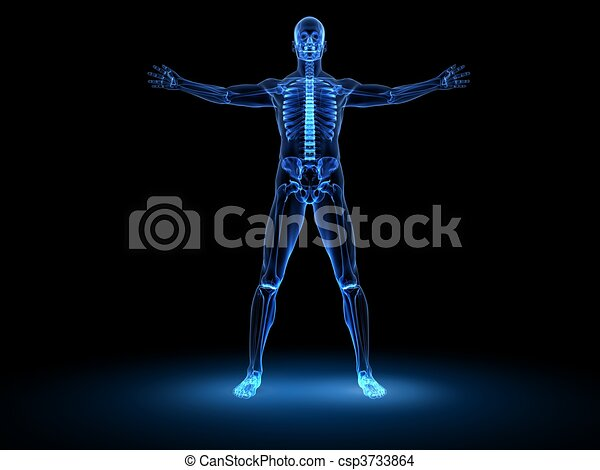 x-ray male model  - csp3733864