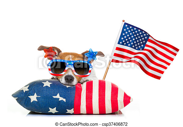 jack russell dog celebrating 4th of july independence day holidays with american flag and sunglasses, isolated on white background
