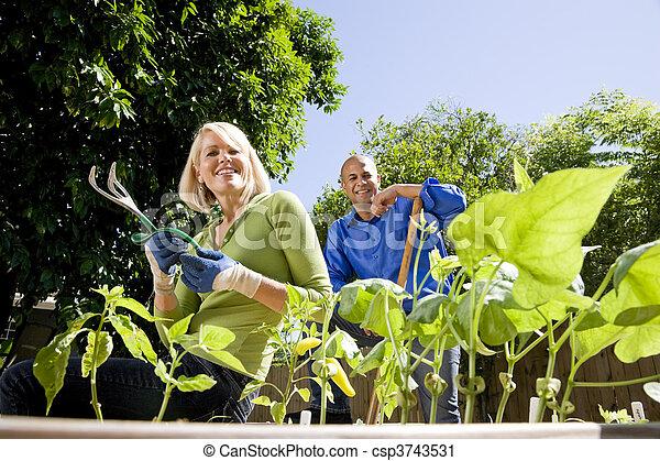 Couple working on vegetable garden in backyard - csp3743531