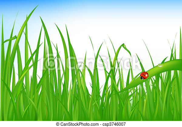 Grass With Ladybird - csp3746007