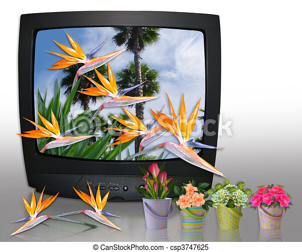 Stock illustrations of home and garden tv image and illustration composition of csp3747625 Home garden tv