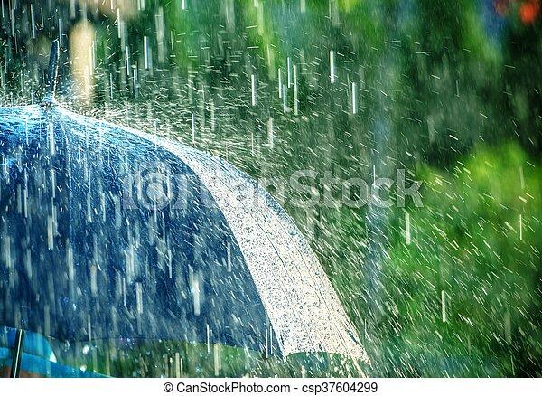 Summer Rain Storm