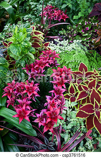 red coleus and flower - csp3761516