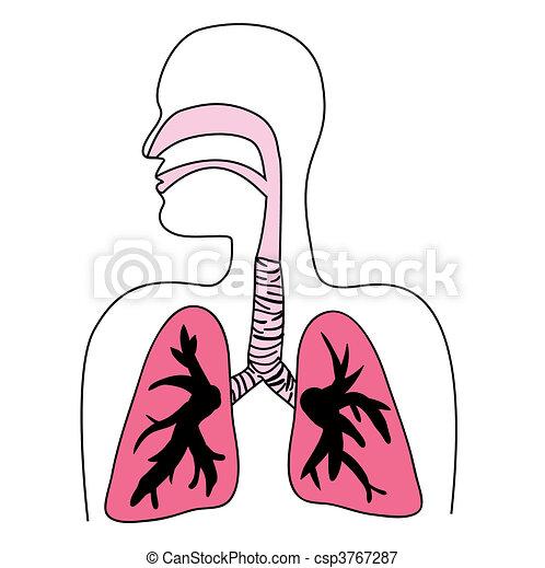 Human Respiratory System Diagram - csp3767287