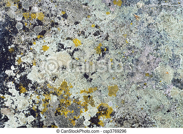 Grunge moldy concrete slab - csp3769296