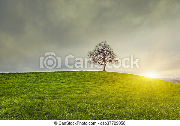 Dramatic sky and sunsrise over old lonely tree - Lonely tree