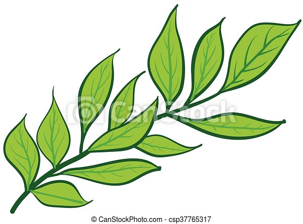 Green branch with leaves - csp37765317