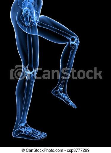 leg x-ray illustration  - csp3777299
