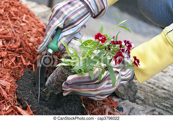 Planting Flowers - csp3796022
