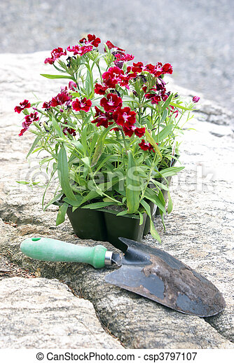 Flowers to Plant - csp3797107