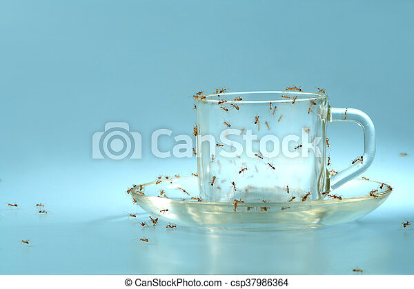 Empty cup and saucer covered by ant - csp37986364